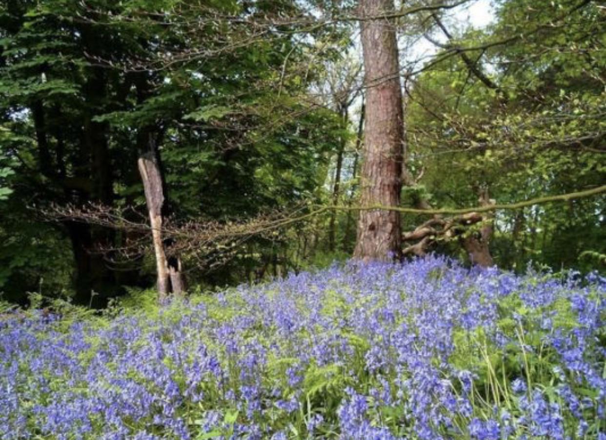 Edinburgh - Ravelston Woods