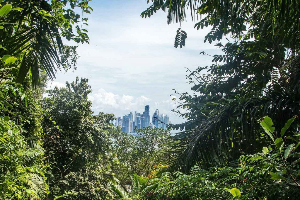 Panama---City-in-the-Rainforest