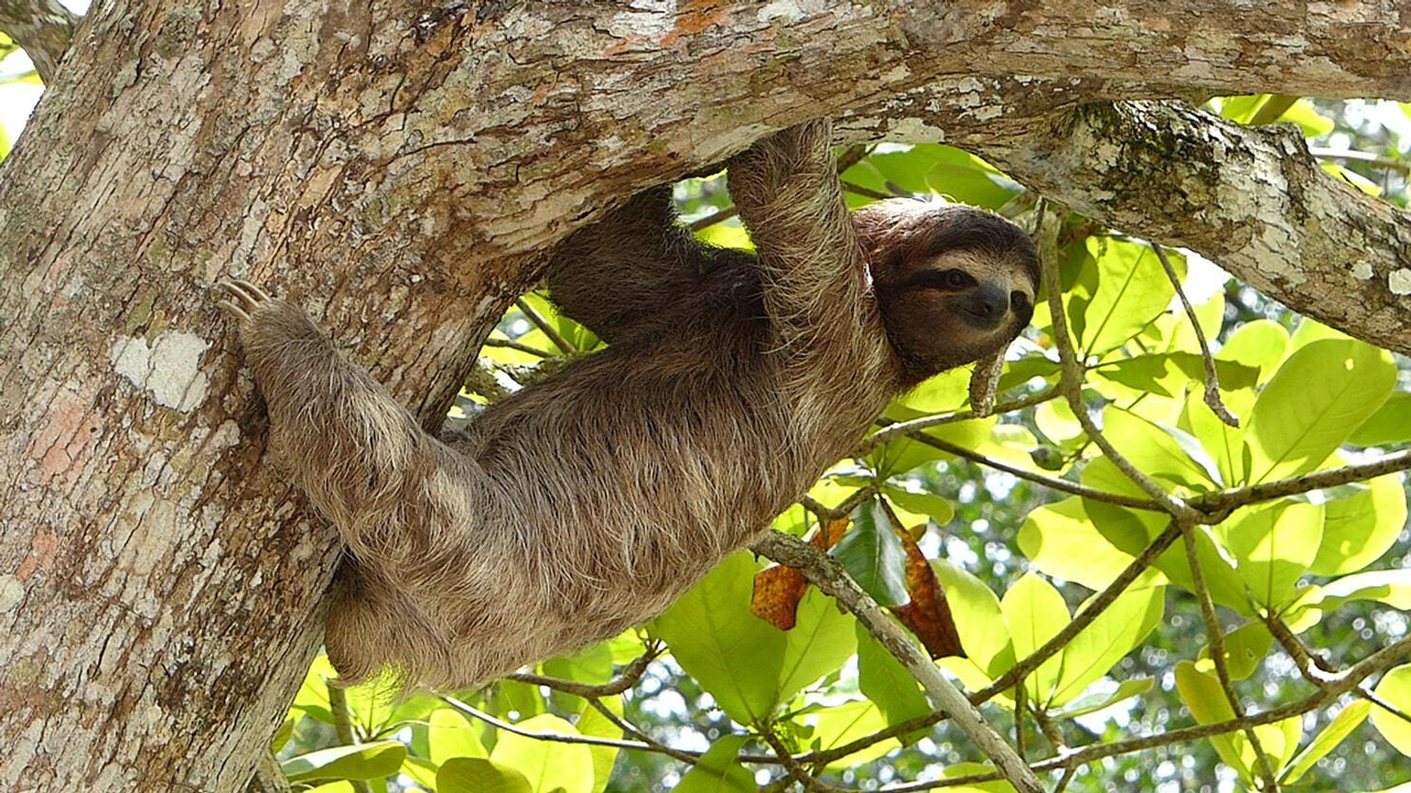 wild life sloth