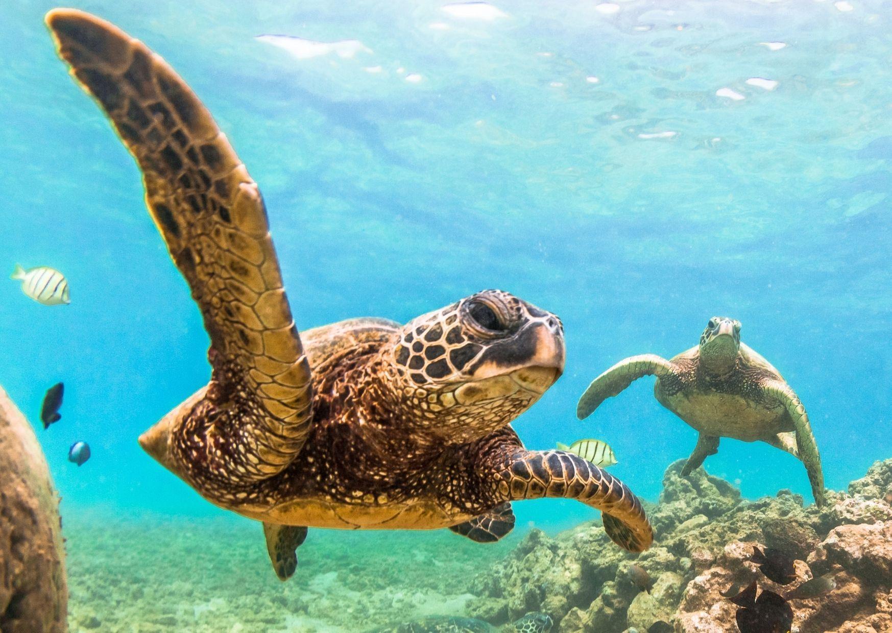 cayman islands turtles