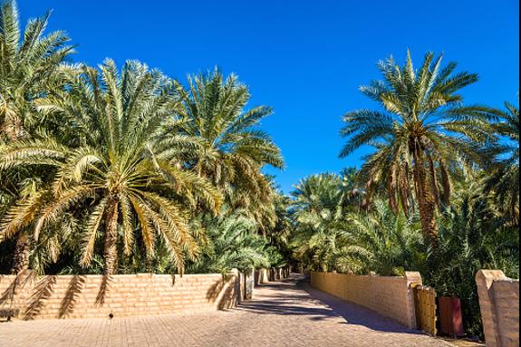 Al Ain date orchard