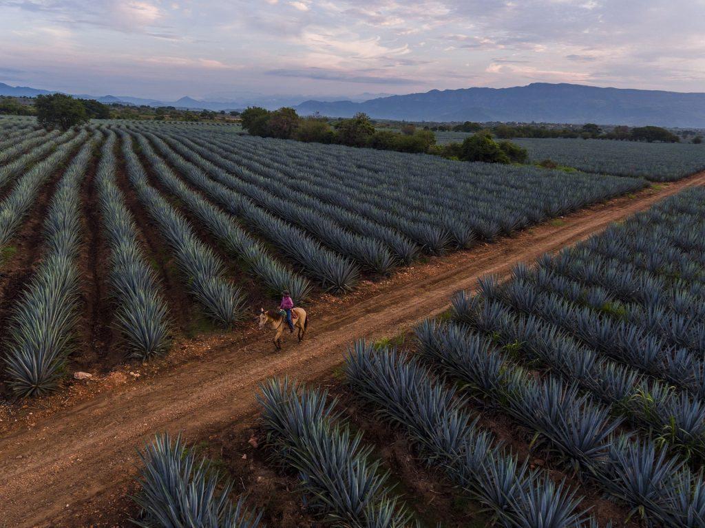 tequila tours in guadalajara